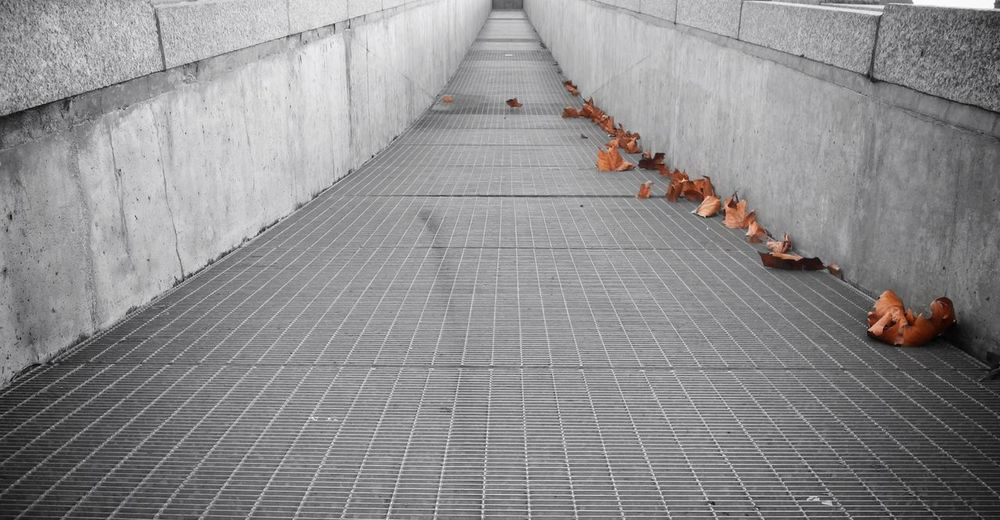 View of dry leaves on pavement