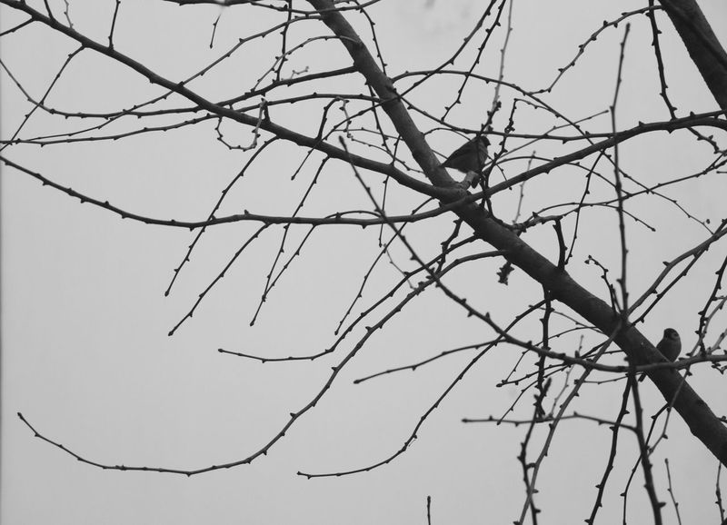 Sky Bare Tree No People Nature Outdoors Tree Bird Da y Winter Blackandwhite Black & White Black And White Amazing View Nature China Photos (null) Check This Out Day Taking Photos China View