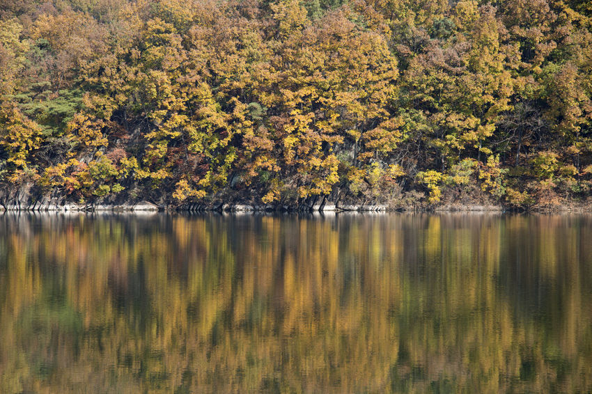 autumn landscape of Busodamak, a beautiful lake located in Okcheon, Chungbuk, South Korea Autumn Autumn Reflections Autumn Leaves Busodamak Okcheon Beauty In Nature Day Forest Grass Growth Lake Lake In Autumn Lake In The Morning Lake Reflection Landscape Morning Lake Nature No People Outdoors Reflection Scenics Tranquil Scene Tranquility Tree Water