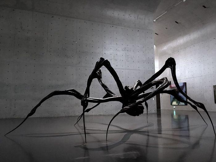 《潜伏的蜘蛛》