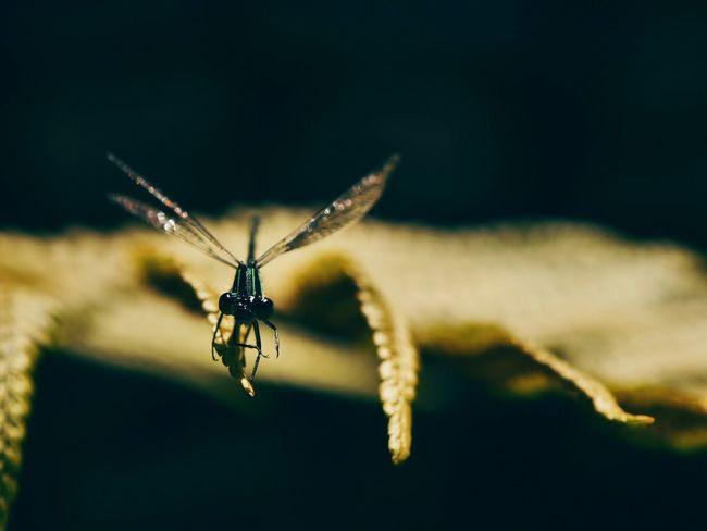 Insect Macro Green Shadow Garden Sun Nature Photography Libellule Taking Photos