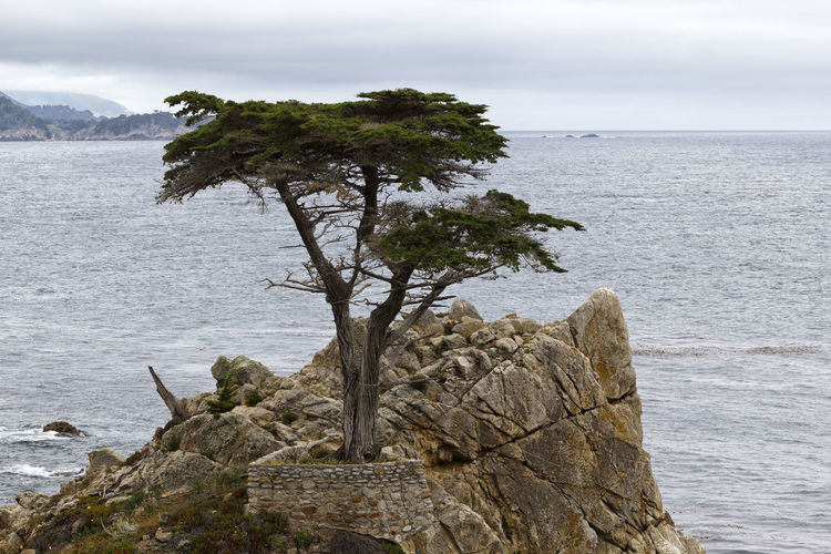 Lone Cypress Tree Water Rock Rock - Object Sea Solid Sky Scenics - Nature Beauty In Nature Tree Tranquility Nature Plant Tranquil Scene No People Day Non-urban Scene Horizon Outdoors Cloud - Sky Horizon Over Water Eroded Lone Cypress Pacific Ocean Overcast Pebble Beach