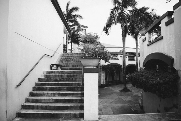 Humanless Architecture Blackandwhite Building Exterior Built Structure Day Diminishing Perspective EyeemPhilippines Footpath Growth Leading No People Outdoors Outside Palm Tree Railing Sky Staircase Stairs Stairway Steps Steps And Staircase Steps And Staircases The Way Forward Tree