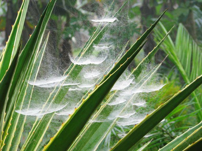 Close-up of spider webs on leaves