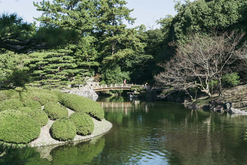 Plant Tree Water Growth Nature Green Color Lake Beauty In Nature Day No People Reflection Tranquility Waterfront Formal Garden Garden Japanese Garden Built Structure Scenics - Nature Outdoors