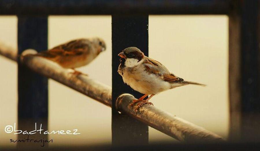 Clickclick Littlesparrow Chirpingbird Indiapictures Itsphotosensation😎