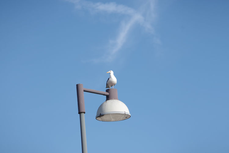 Low angle view of seagull perching on street light against sky