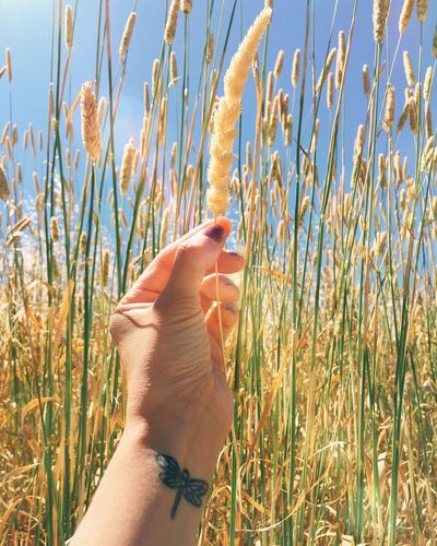 For you! Happy Friday! Agriculture Agriculture Photography Close-up Focus On Foreground Giving Grass Grass Grassy Growth Hand Holding Up... Lifestyles Offering Overwhelmed Person Personal Perspective Point Of View Relaxing Rural Scene Sky Sun Tall Tattoo Touching Tranquility