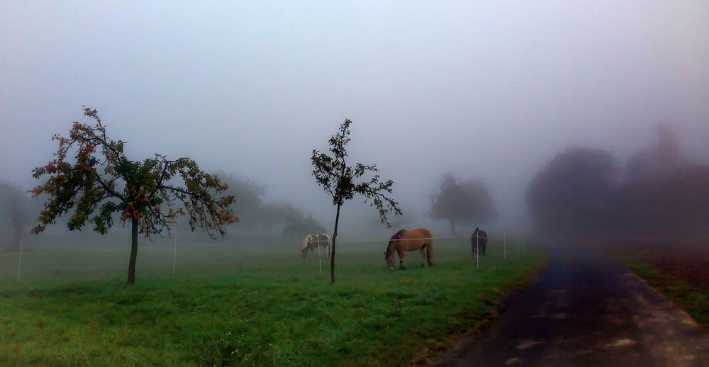 Horses grazing on field against sky during foggy weather