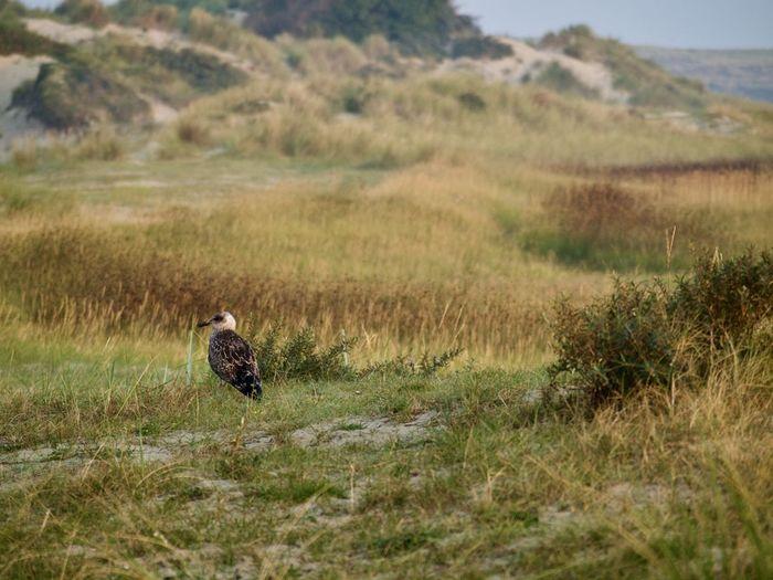 Gulls land.