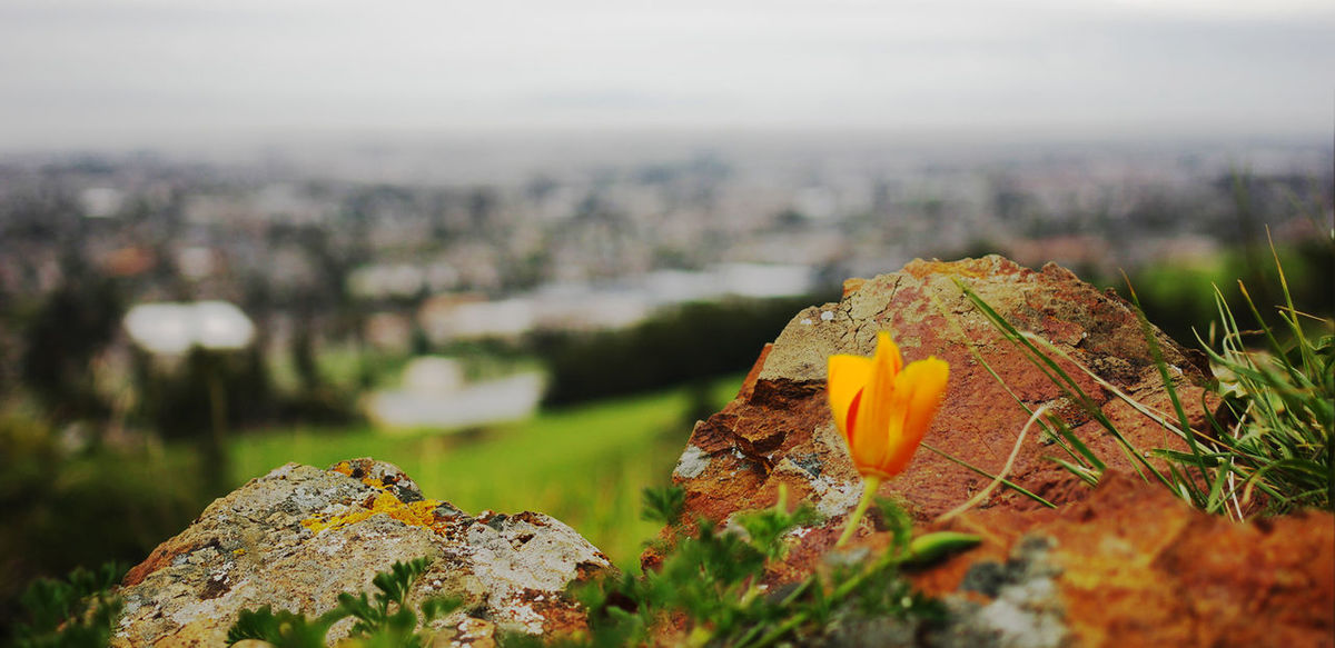 Showcase March Bay Area California Poppy Pentax