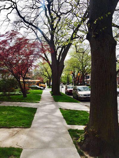 Outdoors New York Brooklyn Sidewalk Afternoonwalk Relaxing Such A Pretty Day☀ Amazing ☺️