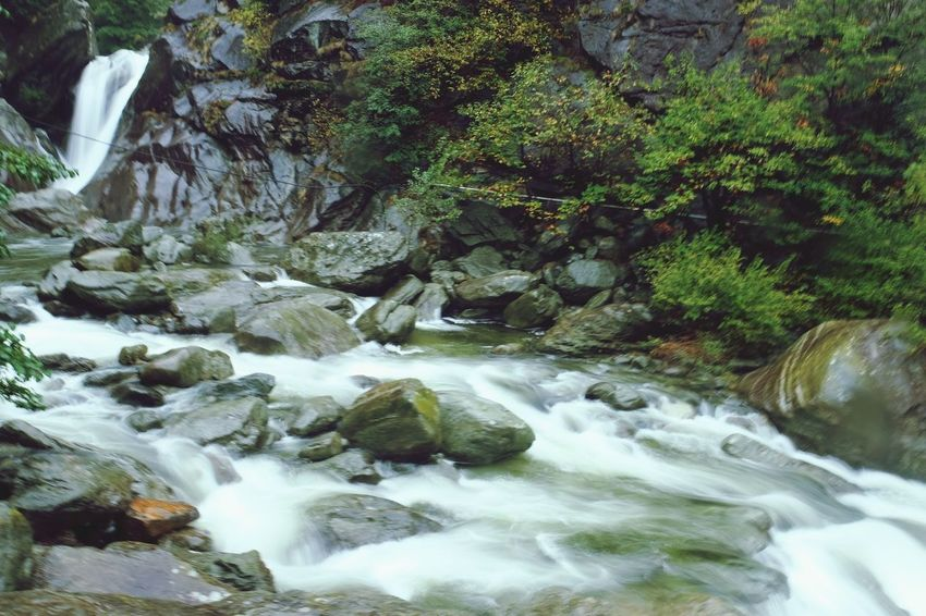 Tree Water Waterfall Forest Motion River Rock - Object