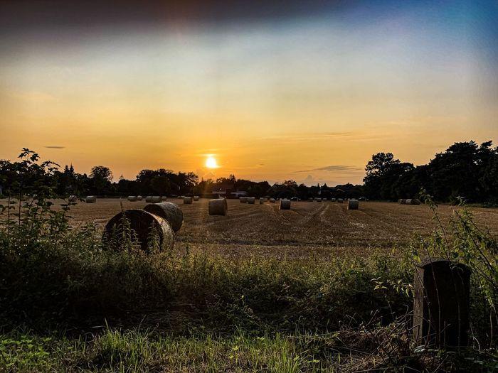 Field Sunset,