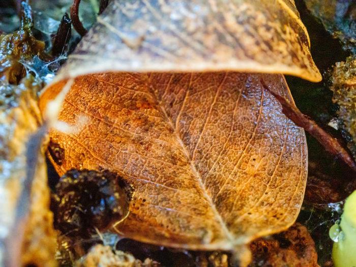 A decaying leaf