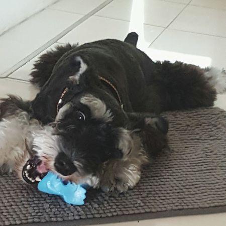 My playful boy.. Chill At Home Puppy Baxter