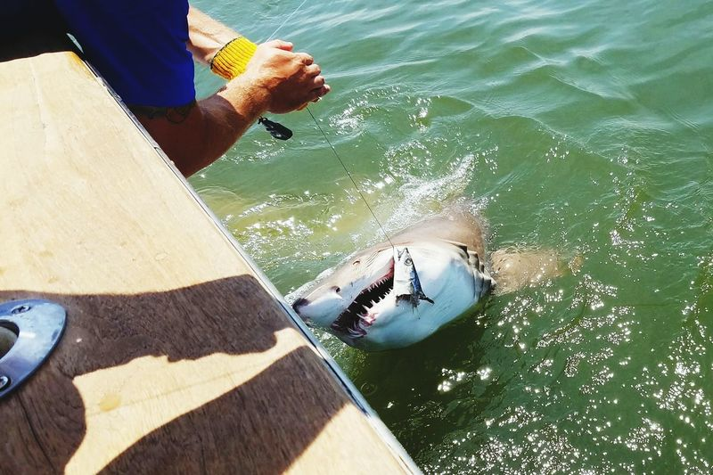 High Angle View Water Low Section Day Only Men Sea Sunlight Outdoors Leisure Activity Shadow Vacations One Person Men Fishing Shark Nature Ocean Deep Sea Fishing Shark Shark Fishing Sharks New Jersey Charter Fishing Sharkbait EyeEmNewHere