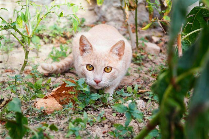 Cat Eyes Cat NX2000 Yellow Portrait Animals