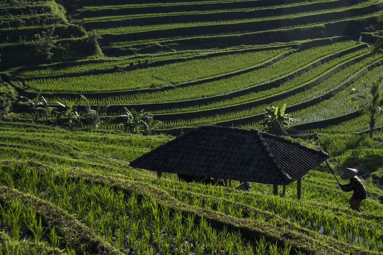 Bali INDONESIA Agriculture Asian Style Conical Hat Beauty In Nature Cereal Plant Day Farm Farmer Field Food Growth Landscape Mountain Nature Outdoors People Plant Rice - Cereal Plant Rice - Food Staple Rice Paddy Rural Scene Terraced Field