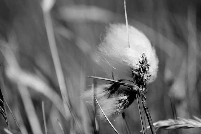 Grass Lifeasiseeit John Nelson Johnnelson Landscape Scotland Cotton Grass
