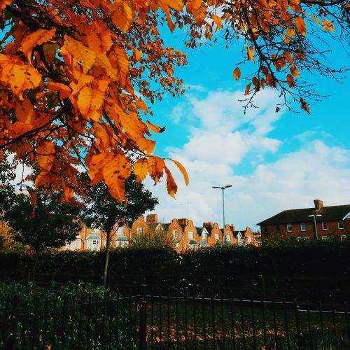 Season change Autumn Tree Change Nature
