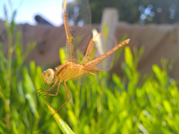 taken with Microsoft lumia 640 XL Dragonfly Golden Micro Nature Wildlife & Nature Wildlife Photography Animal Wildlife Animals In The Wild Golden Dragonfly Grass Insect Micro Photography Nature Wildlife