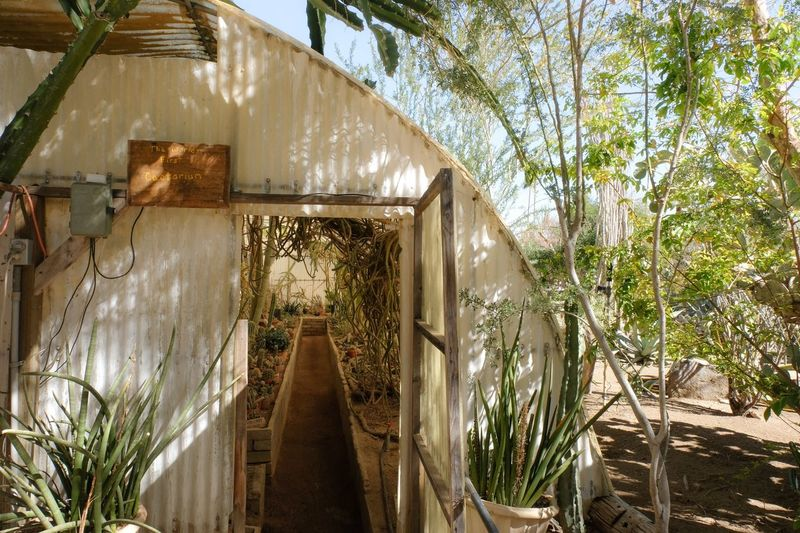 Cactarium exterior Cactus Cactus Cacti Garden Tree Built Structure Architecture Water Outdoors No People California Dreamin Building Exterior