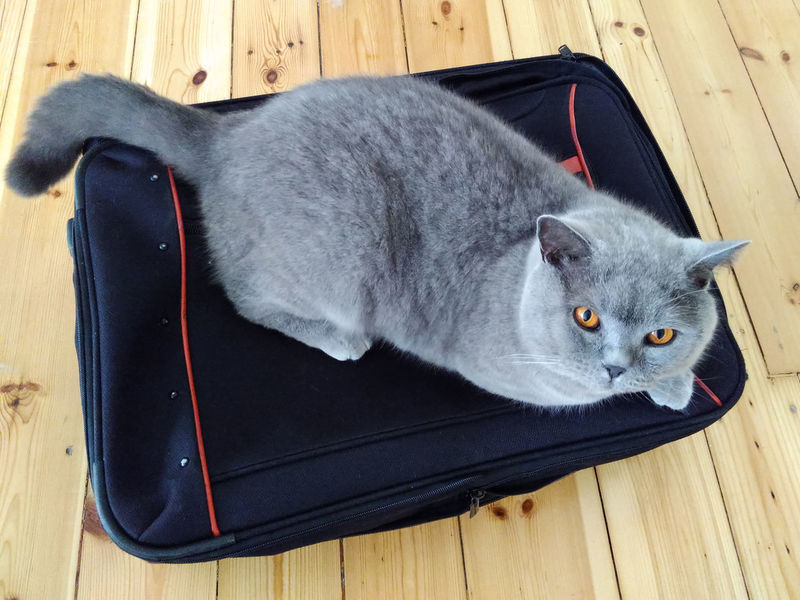 Animal Head  Animal Themes Bag Cat Cat On Bag Companion Departure Domestic Animals Domestic Cat Don't Leave Pets Separation Take Me Away Take Me With You Traveling Whisker