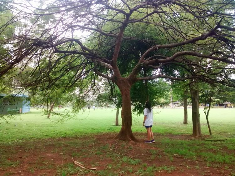 My love ❤ Girlfriend Nature Parque  Day Green Color Love Photography Love Photography My Love 2016 EyeEm Nature Summer Plant Sunday Tranquility Beauty In Nature Parque  Barueri Green Color Photographic Memory