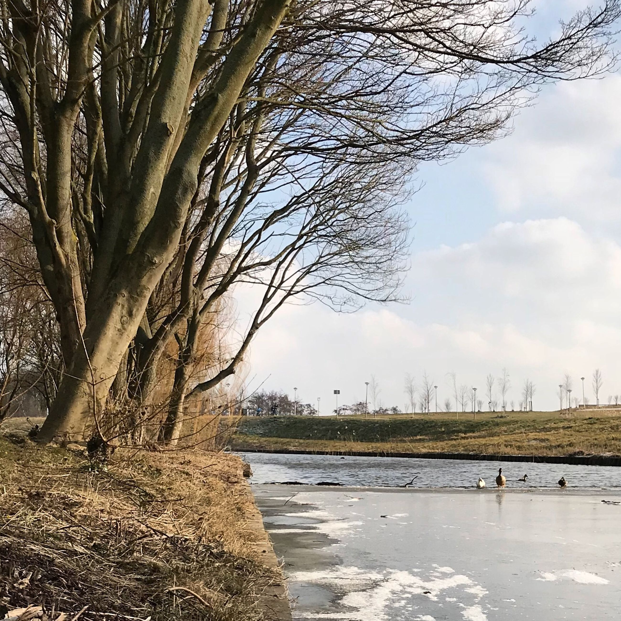 tree, water, bare tree, nature, beauty in nature, sky, day, branch, scenics, tranquility, tranquil scene, outdoors, no people, lake, growth