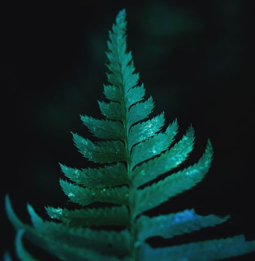 Hiking Forest Close-up No People Plant Green Color Growth Nature Beauty In Nature Leaf Indoors  Studio Shot Selective Focus Freshness Blue Plant Part