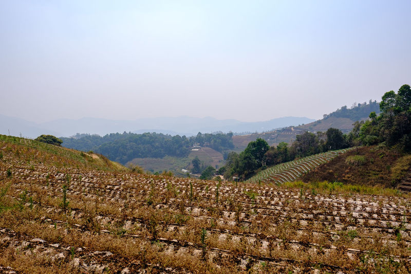 Dry Season in Chiang Mai, Thailand. Haze Smog Chiang Mai Hot Thailand Agriculture Beauty In Nature Crop  Day Dry Growth Landscape Mon Jam Mountain Nature No People Outdoors Rural Scene Scenery Scenics Sky Tranquil Scene Tranquility Tree