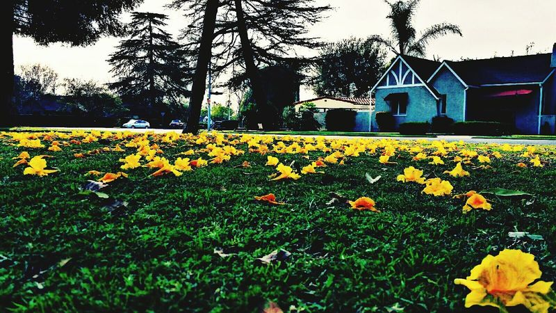Flowers have fallen Mywork Beautiful Outside Covina LoveMyWork MyPhotography Photography Nature Peaceful Peaceful Serenity Beauty Flowers Fallen