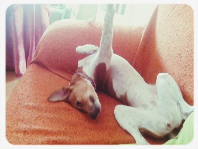 Desperezándose I Love My Dog Amo A Mi Perro  Perro Dog