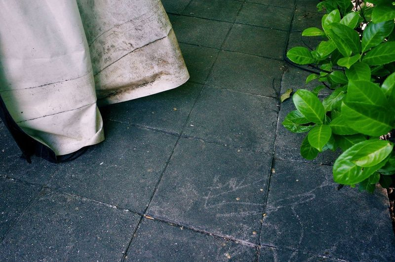 Body Part Day Flooring Footpath Green Color High Angle View Human Body Part Human Leg Leaf Low Section Nature Outdoors Paving Stone People Plant Plant Part Shoe Tile Tiled Floor Unrecognizable Person