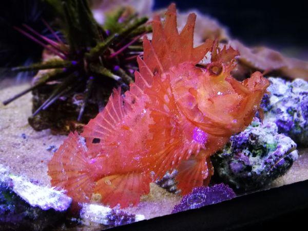 UnderSea Sea Life Nature Animal Themes
