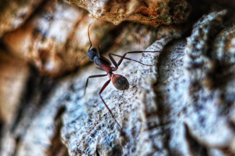 Ant on tree
