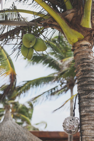 Beach Life Mexico Palm Tree Travel Beauty In Nature Coconut Trees Nature Outdoors Travel Destinations Tree Tree Trunk Zen