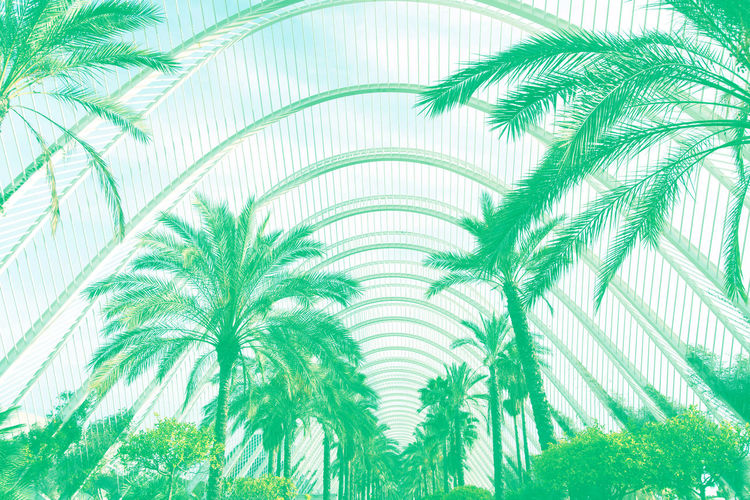 palm background color aquamarine Green Color Leaf Plant Plant Part Nature Growth Palm Tree No People Pattern Palm Leaf Tree Backgrounds Tropical Climate Beauty In Nature Close-up Frond Textured  Outdoors Day Turquoise Colored