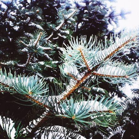 Tree Nature Snow ❄