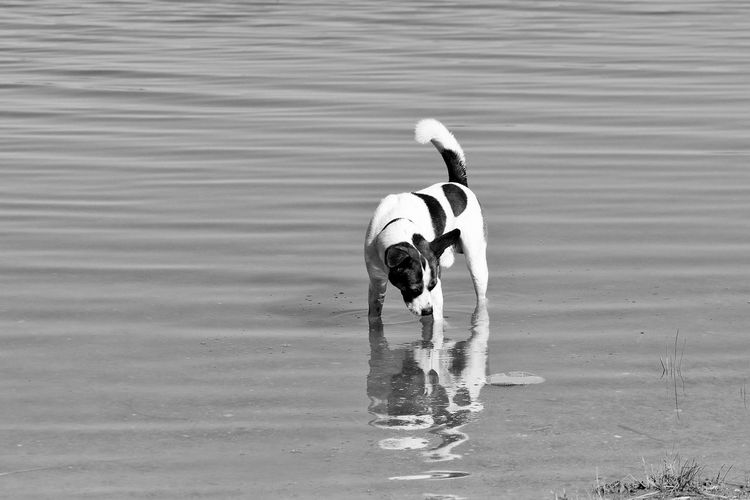 Animal Themes Beach Day Dog Hund Lake Outdoors Reflexions S/w See Trzoska Water