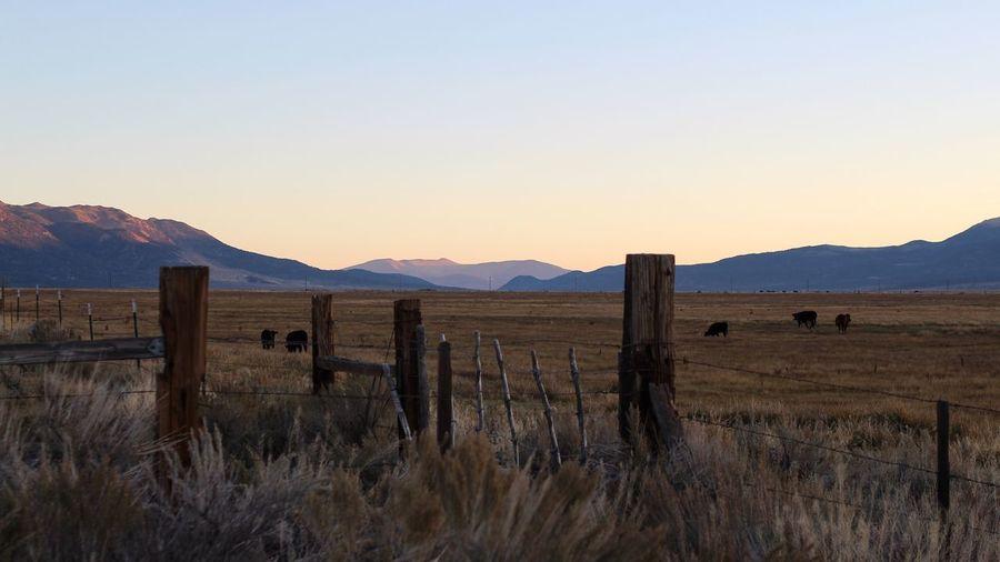 Morning Light Landscape Rural Scene Tadaa Community