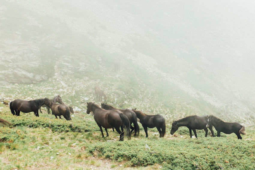 Animal Behavior Animal Themes Beauty In Nature Countryside Day Domestic Animals Domestic Cattle Field Full Length Grazing Green Color Herbivorous Horse Livestock Mammal Nature Non-urban Scene Outdoors Pasture Standing Tranquil Scene Tranquility