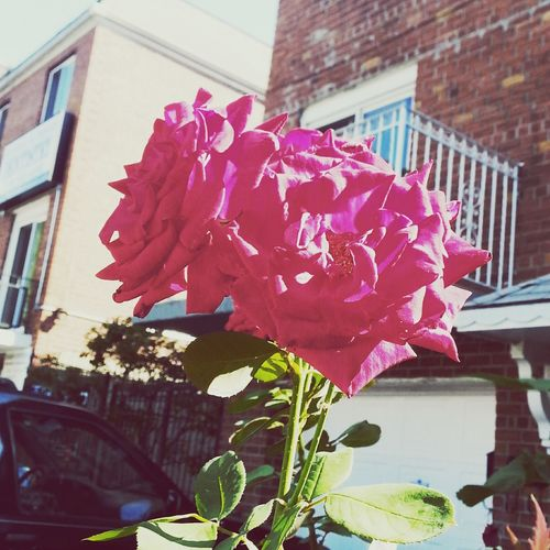 Astoria, Queens New York City Edit Beautiful Nature Spring Flowers Flowers Filter Taken In The Summer Summertime