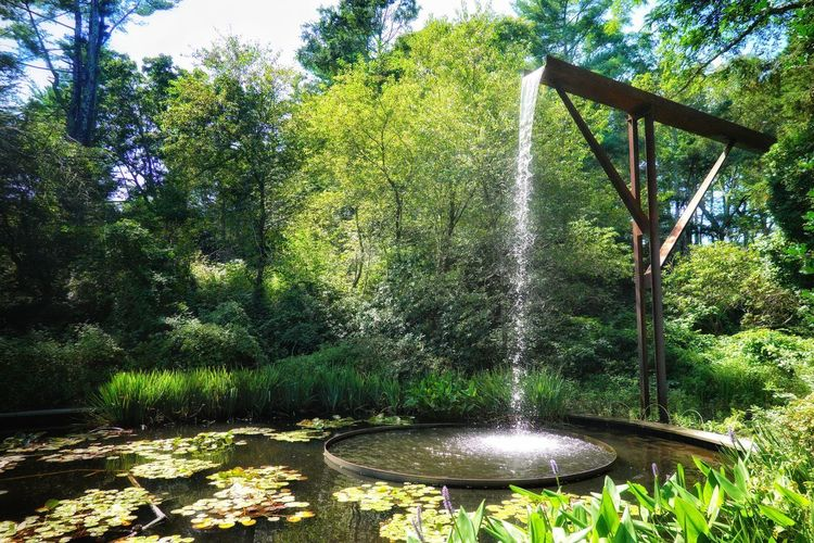Fountain in park by lake in forest