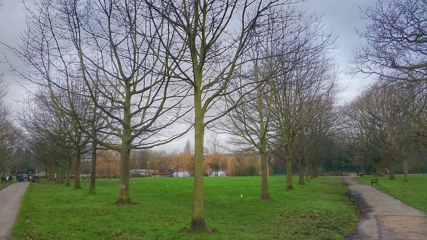 Landscape_photography Landscape At The Park Trees Path Paths Pathways Walking Around not a mirror Chelmsford Urban Landscape