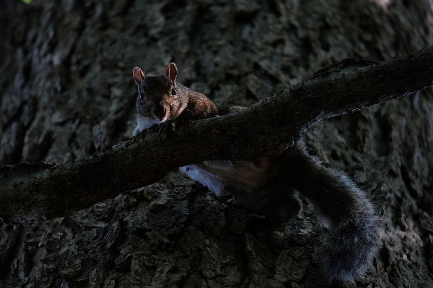 Iguana Reptile Leopard Chipmunk Squirrel Tail