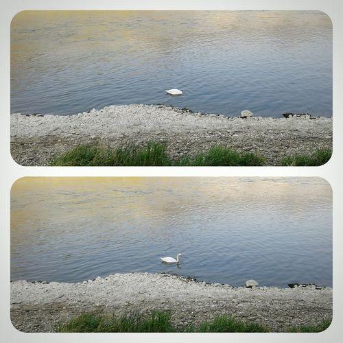 Swan River Riverside