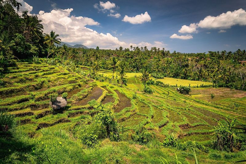 Follow me on instagram: pandevonium_images Agriculture Bali INDONESIA Bali, Indonesia Tropical Climate Tropical Paradise Landscape Cloud - Sky Field Scenics Nature Travel Destinations Beauty No People Tranquil Scene Rural Scene Outdoors Terraced Field Green Color Rice Paddy Beauty In Nature Mountain Candidasa Bali Explore Travel