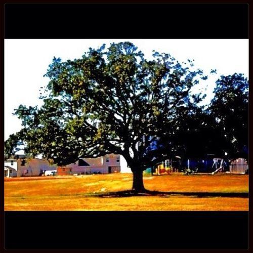 Tree Lonely Tree Artsy Fartsy Nature